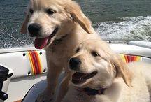 Ellieop / I love dogs