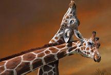Cute! / by Jeannine Ross