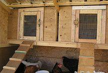Poulailler / Construire un Poulailler:  1: Le Poulailler d'été  2: Construire un Poulailler chauffé  3: Construire un Poulailler urbain isolé  4: Poules pondeuses au poulailler d'hiver  5: Bol chauffant pour la saison froide  6. Les espèces de Poules
