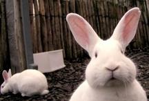 REF: Rabbits