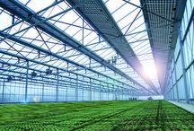 Univers : Intensive Farming