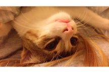 Cabbar Oğlan / #cat #kitten