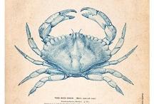 Zodiac crab