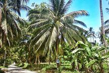 Palms of Samui