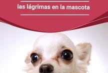 Salud mascotas