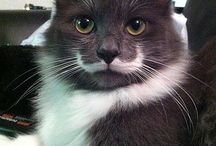 Move Over GC, Its Hamilton The Hipster Cat! / For the love of Hamilton, the Hipster Cat!