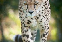 wildlifes