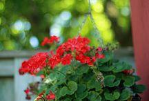 kvety v truhlikoch