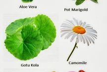 gyógynövény