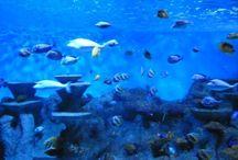 Aquarium Roquetas