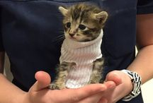 Cute cat wear cute sweater / A cute little kitten who was rescued in hurricane Mathew has a new home ideal for such cutie and also got tiny little sock sweater to keep the cold away.