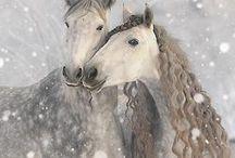 Hevoset♥