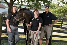 NC State CVM Equine / The Equine Department and Services at NC State's College of Veterinary Medicine