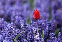 Gardening / by Tami Martin Pinson