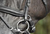 Stunning Horse bridles