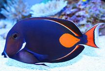 Vissen webshop