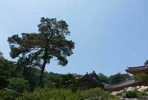 한국의 미 beauty of korea