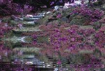 мир фиолетового