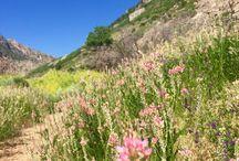 Travel Utah Diary