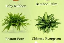 Herbaceous Houseplants