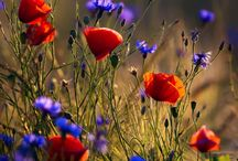 Virágok.