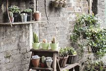 Flower shops / by Carolyn Francis