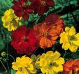 Varius Plants