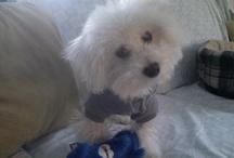 Puppy Dog Things / by AliciA(Wichita27)