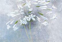 Bloemen schilderijen / Flower paintings / Bloemen schilderij. Ideaal als huis decoratie en wand decoratie. Flower paintings