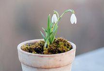 spring, oh spring ..