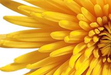 color - MELLOW • YELLOW / What could be more cheerful than yellow? / by Bonnie Short