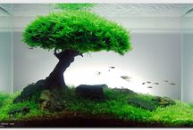 Aquascape Obsession  / Aquascape - think landscape for your fish tank! It's a fantastic hobby and a beautiful art form. I hope this board will inspire you all to give it a try.