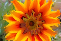 the color orange inspirations