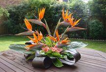 Flowers / Blumen