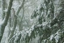 ~ Winter