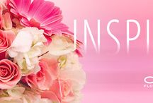 Inspire Campaign / Inspire showcases floral designs from our customers. We want to celebrate florists' inspiration. We see an arrangement at an event, but the real inspiration and creativity happens in the back room. We want to recognize the florist's creative process.