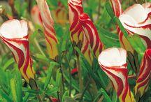 Plants I love / by Glenn Bryant