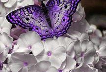 fluturi ❤