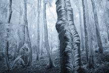 Landscape / by Antony Barroux
