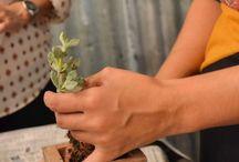 #Jornada Cultivar