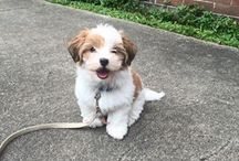 Dogs and puppies / To cute to resist