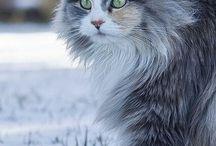 Cats Cats Cats & more Cats