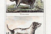 Perris / Una raza de perro extinta que se dedicaba a correr en una rueca como un hámster. Esta rueca rotaba el asador. En domingos no trabajaban. Se los llevaban a la iglesia como calentadores de pies.