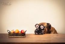 Dog creative