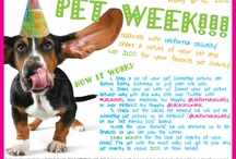 pet week 2012! / Use this board as inspiration for our PET WEEK COMPETITION! May 6-12. Winner receives $200 for a pet charity of their choice :)