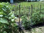 Garden / Forrest gardens, urban farming, gardens
