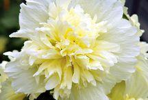 Floral floral