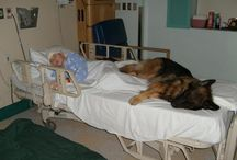 Friends / by Jim Barron