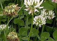 Rośliny lecznicze ziola