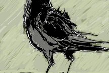 Crow Raven Corvid / Images of crows and ravens.